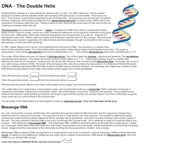 Dna The Double Helix Worksheet – Dna Worksheet