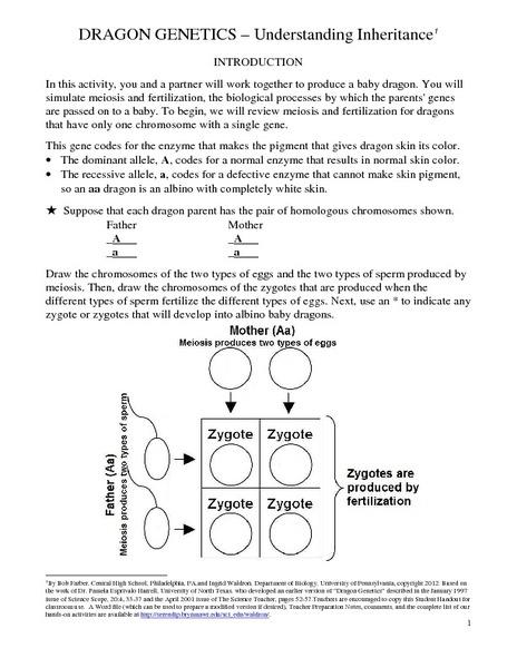 dragon genetics worksheet free worksheets library download and print worksheets free on. Black Bedroom Furniture Sets. Home Design Ideas