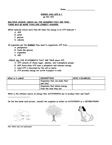 Atp Worksheet - 28 templates - Pictures Glycolysis Worksheet ...