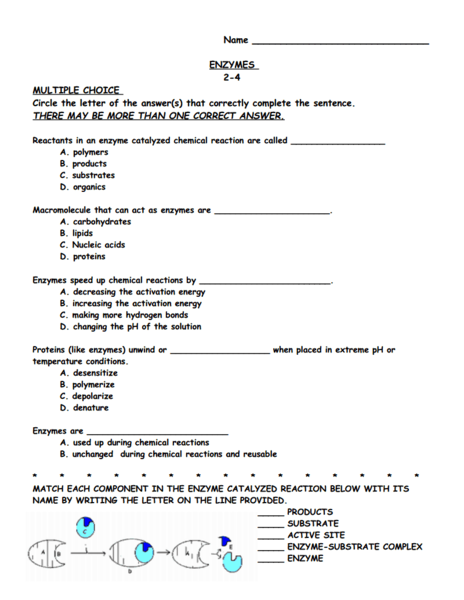 Enzyme Worksheet: Enzymes 9th 12th Grade Worksheet Lesson Planet ...