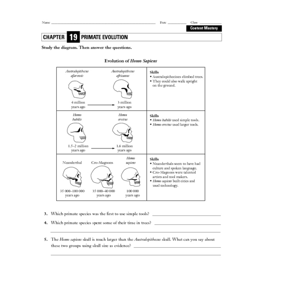 All Worksheets Evolution Worksheets Free Printable Preeschool – Evolution Worksheet