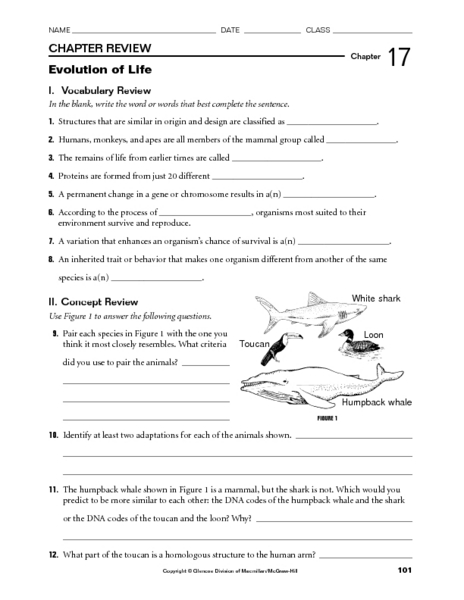 Worksheets Natural Selection Worksheet evolution by natural selection worksheet answers key intrepidpath worksheets