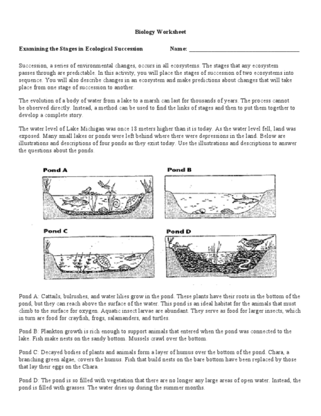 Printables Ecology Worksheets For High School examining the stages of ecological succession 9th 12th grade worksheet lesson planet