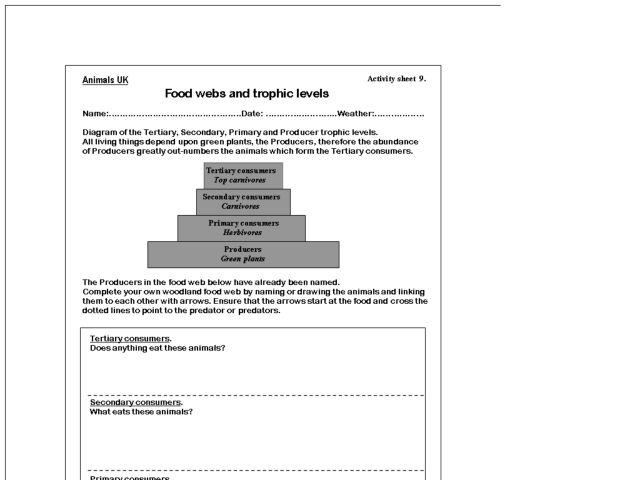 Food webs food chains and trophic levels worksheet answers