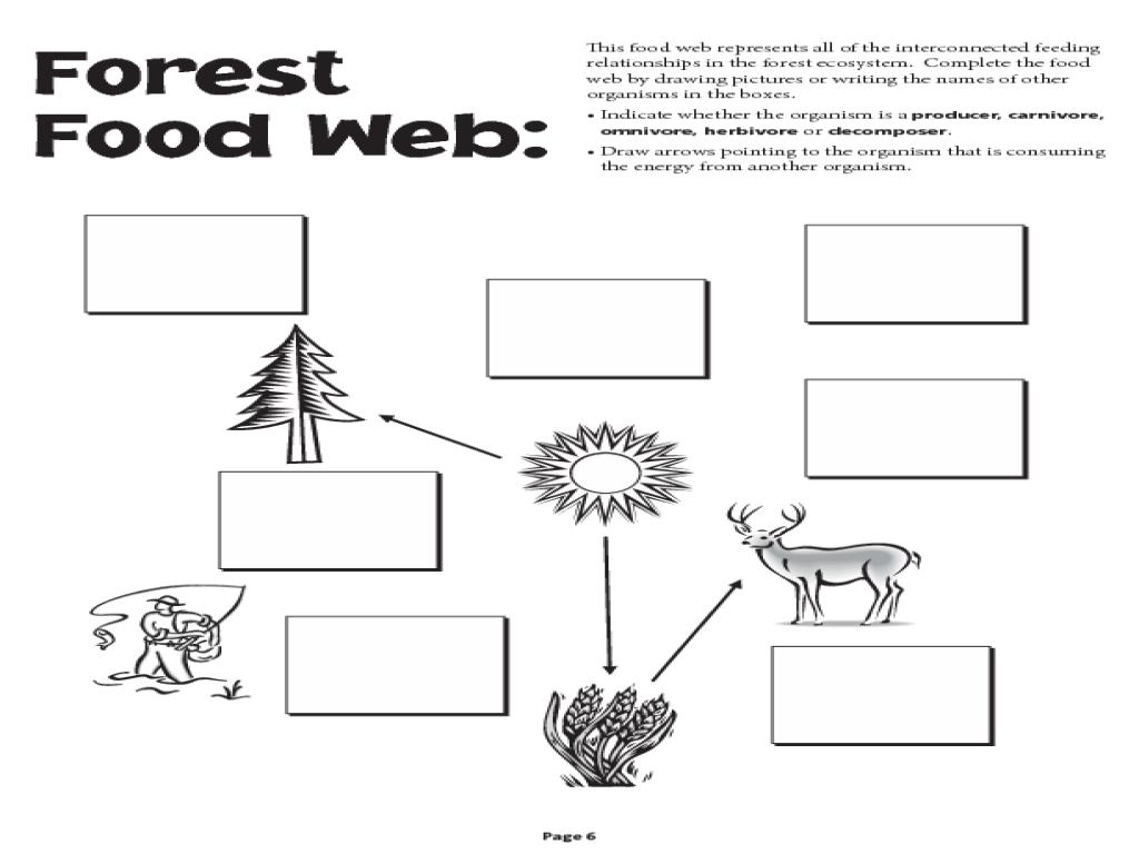 Food Chain Web Worksheet Pdf Foodfash Co