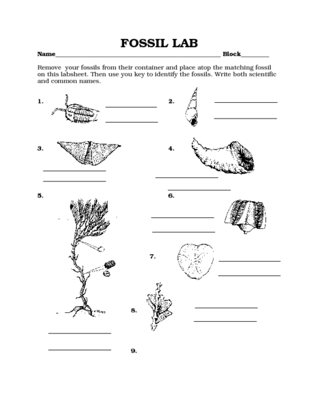 Worksheet Fossil Worksheets fossil lab 8th 10th grade worksheet lesson planet