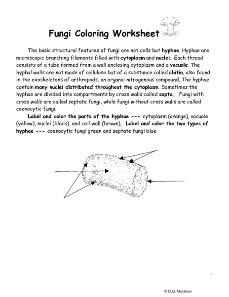 Fungi Coloring Worksheet - Khayav