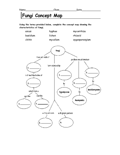 Pictures Concept Map Worksheet - Studioxcess
