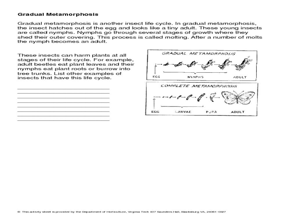 Insect Metamorphosis Worksheet - Synhoff
