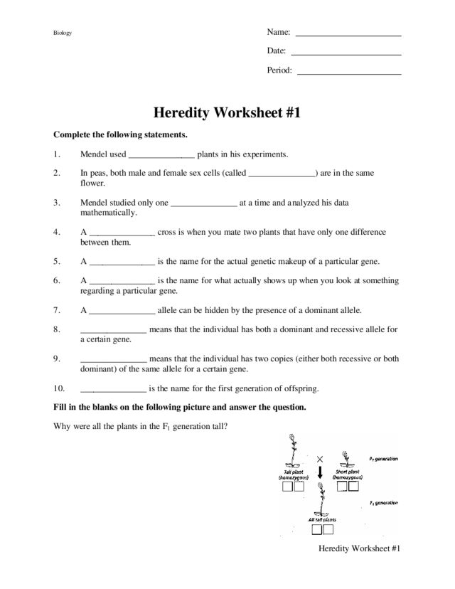 Heredity Worksheet #1 9th - 12th Grade Worksheet | Lesson Planet