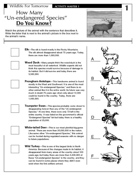 Printables Endangered Species Worksheets how many endangered do you know 5th 9th grade worksheet lesson planet