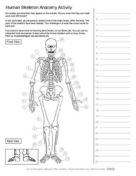 all worksheets skeleton printable worksheets printable worksheets guide for children and parents. Black Bedroom Furniture Sets. Home Design Ideas