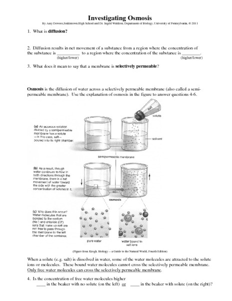 Worksheets Diffusion And Osmosis Worksheet Answers osmosis worksheet answers and diffusion printables gozoneguide