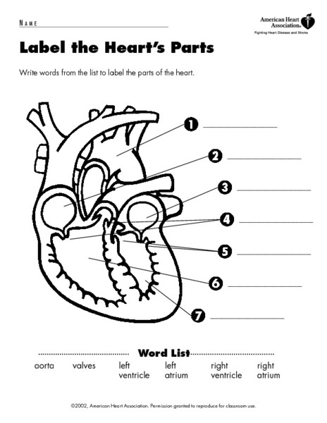 7th Grade Lung Diagram Free Engine Image For User Sketch