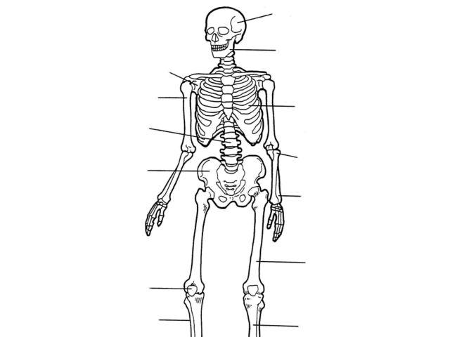 Label the Skeleton 7th - 10th Grade Worksheet | Lesson Planet