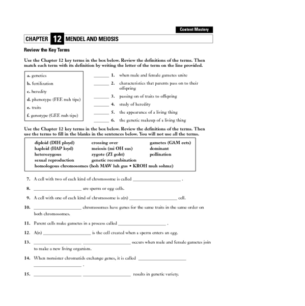 Worksheets. Mendel And Meiosis Worksheet Answers ...