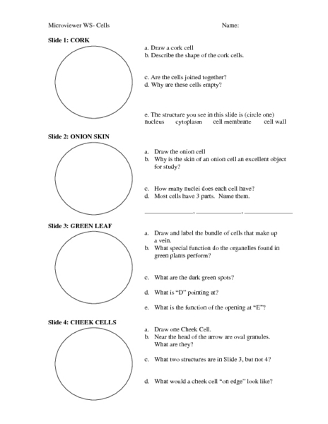 Mitosis Worksheet 7th Grade Microviewer-worksheet.jpg? ...
