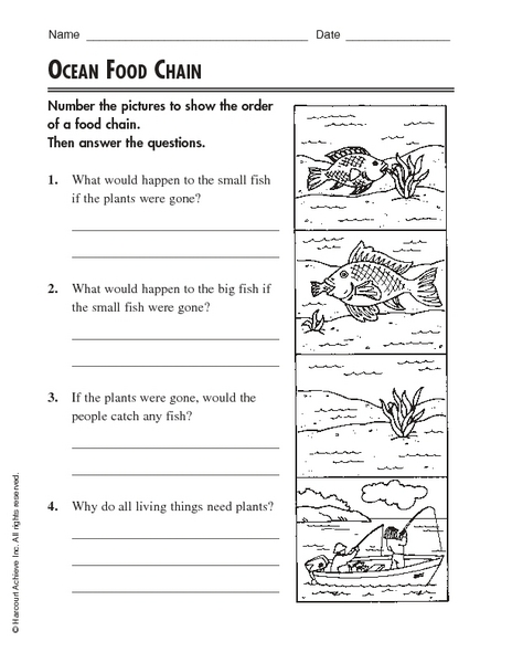 Worksheet Free Food Chain Worksheets ocean food chain 2nd 4th grade worksheet lesson planet
