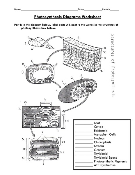 Photosynthesis Diagrams Worksheet 7th - 12th Grade Worksheet ...