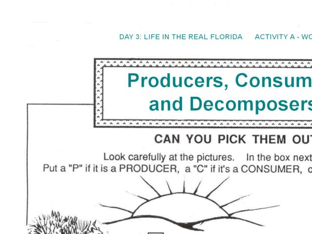 Worksheets Producers Consumers And Decomposers Worksheet producers and consumers decomposers 1st 4th grade worksheet lesson planet
