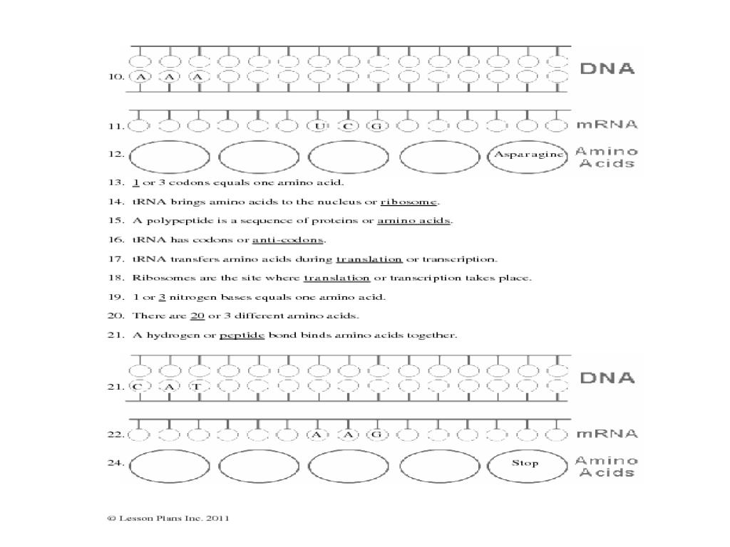 Transcription And Translation Worksheet