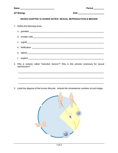 Mitosis and asexual reproduction worksheet answers