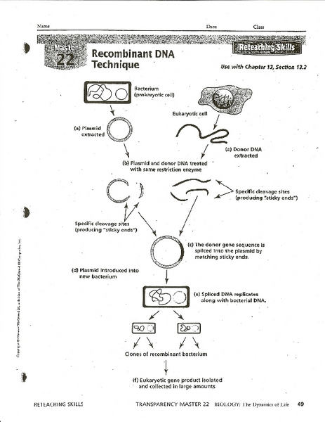 Recombinant DNA Technique 7th - 8th Grade Worksheet | Lesson Planet