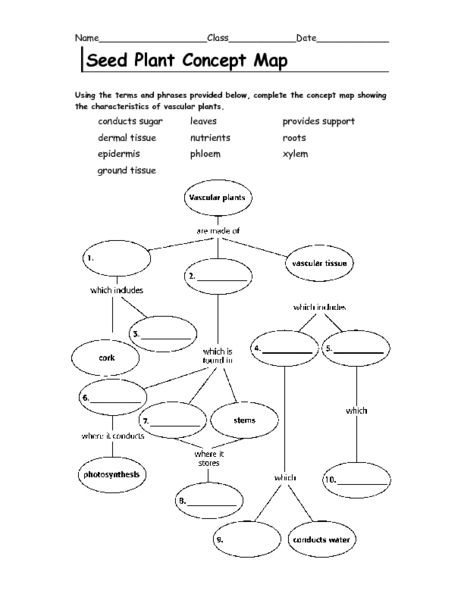 Seed Plant Concept Map 6th - 9th Grade Worksheet | Lesson Planet