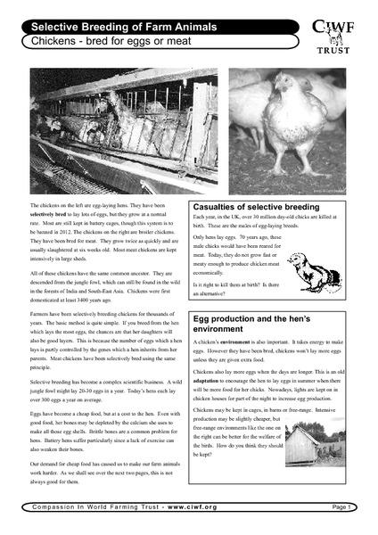 Selective Breeding Worksheet Answers - Worksheets