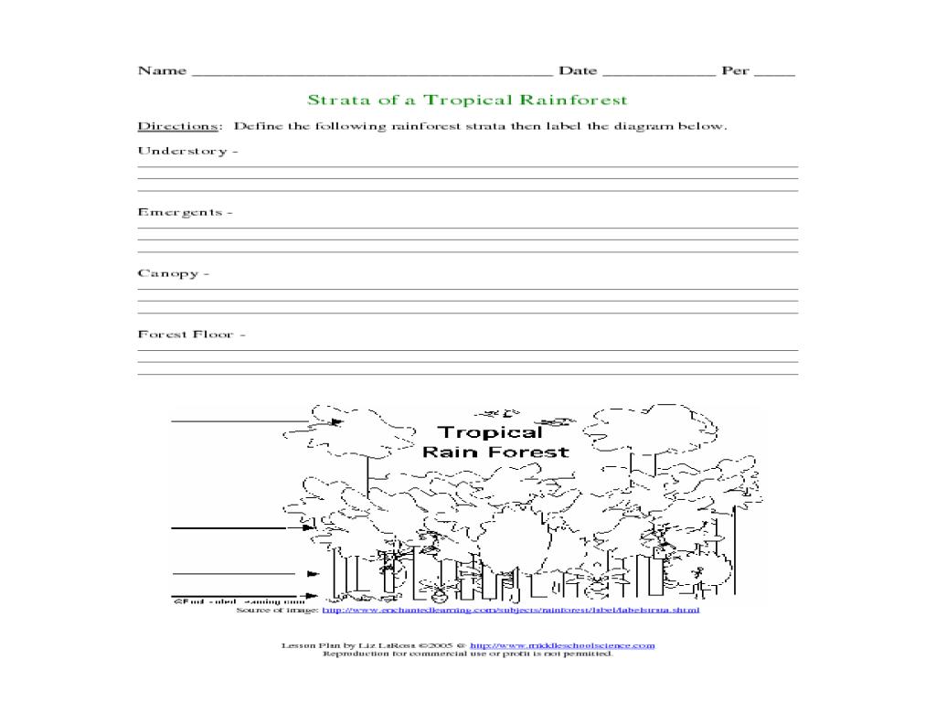 worksheet Rainforest Layers Worksheet strata of a tropical rainforest 3rd 4th grade worksheet lesson planet