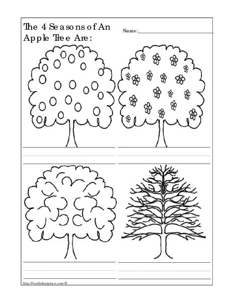 math worksheet : the 4 seasons of an apple tree are kindergarten  1st grade  : Seasons Worksheet For Kindergarten