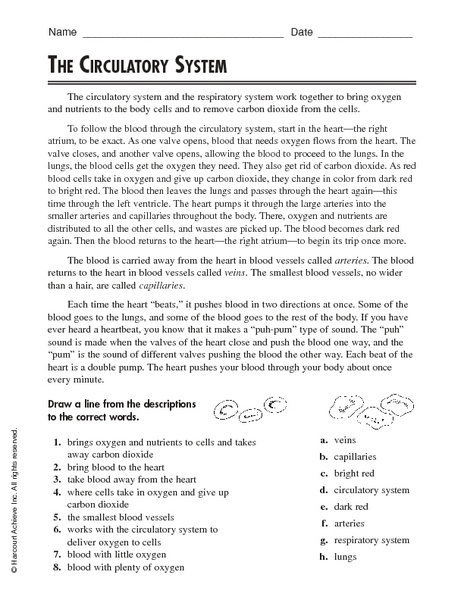 Printables Circulatory System Worksheet the circulatory system 4th 5th grade worksheet lesson planet