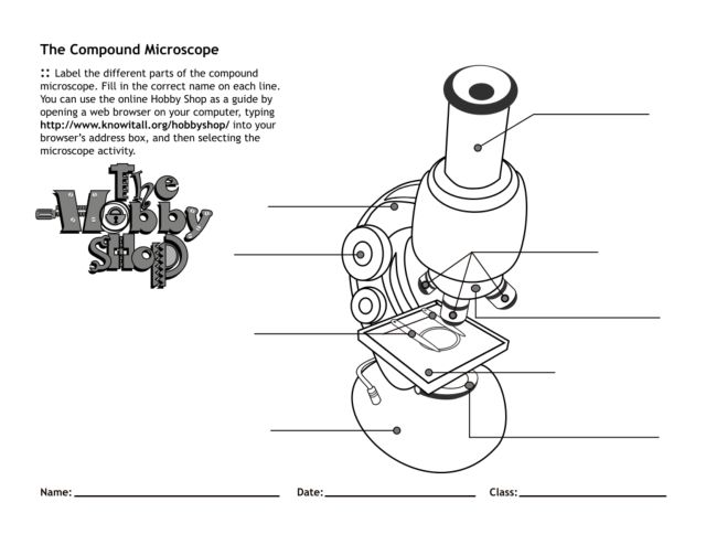 Printables The Compound Microscope Worksheet the compound microscope 4th 7th grade worksheet lesson planet