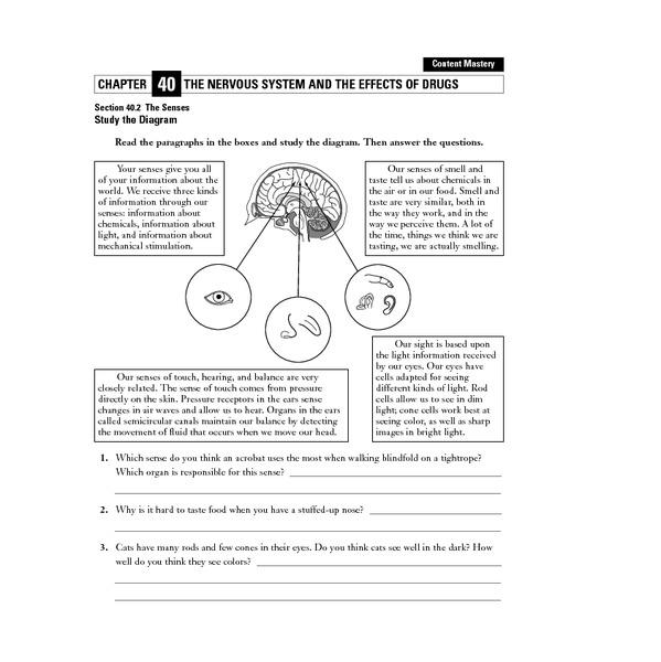 nervous system worksheets Termolak – Nervous System Worksheets