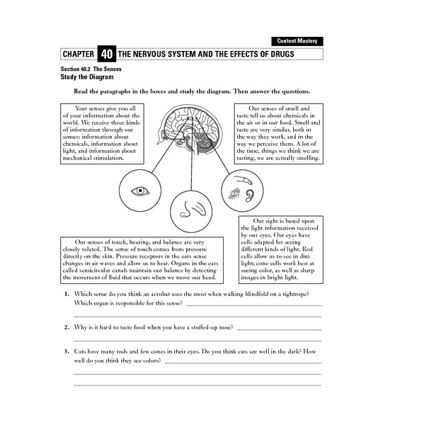 Biology 201 Worksheet On Nervous System Brain And Spinal Cord