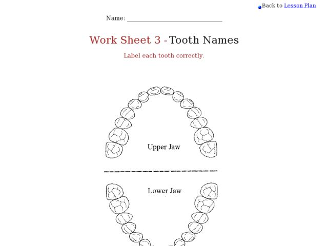 Tooth Surfaces Diagram