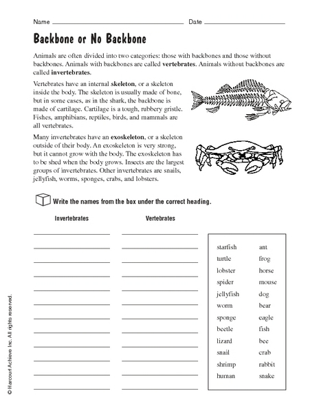Vertebrates and Invertebrates: Backbone or No Backbone 4th - 5th ...