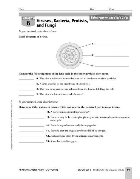 Printables Bacteria Worksheet viruses bacteria protists and fungi 9th higher ed worksheet lesson planet