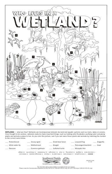 Who Lives in a Wetland? 5th - 6th Grade Worksheet | Lesson Planet