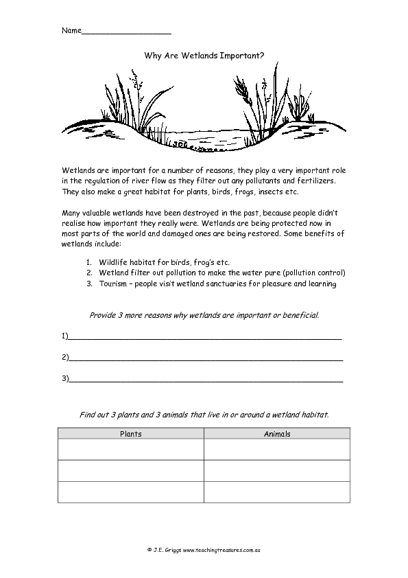 Why Are Wetlands Important? 3rd - 4th Grade Worksheet | Lesson Planet