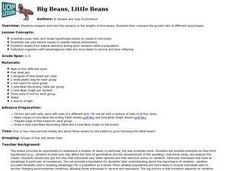 Big Beans, Little Beans Lesson Plan