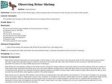 Observing Brine Shrimp Lesson Plan