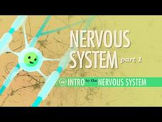 The Nervous System (Part 1) Video