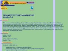 Magnificent Metamorphosis Lesson Plan