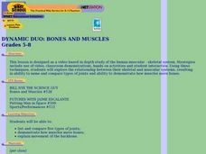 Dynamic Duo: Bones and Muscles Lesson Plan