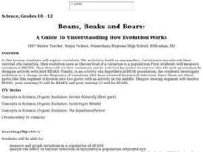 Beans, Beaks and Bears Lesson Plan