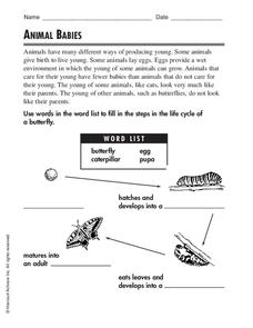 Animal Babies Worksheet