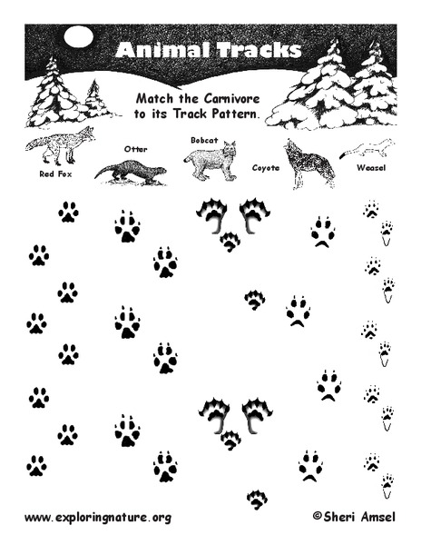 animal tracks worksheet for 3rd 4th grade lesson planet. Black Bedroom Furniture Sets. Home Design Ideas