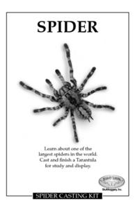 Spider Lesson Plan
