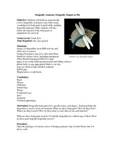 Dragonfly Anatomy: Dragonfly Magnet or Pin Lesson Plan